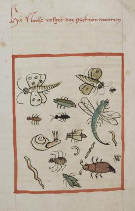 Cod.-Pal.-germ.-311-f.-189v-K.-von-Megenberg-B.-d.-Natur-insectes-détail